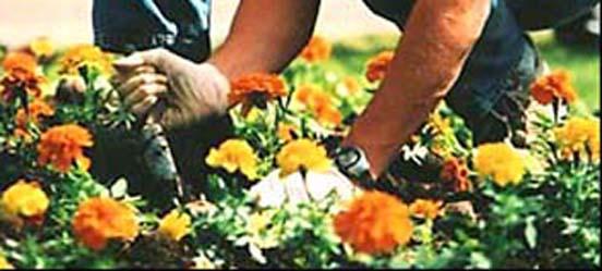 horta e jardim livro: percepção de que não está cuidando apenas da horta e do jardim