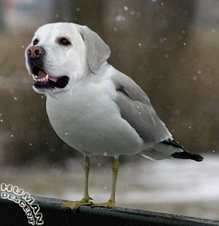 Dog pigeon