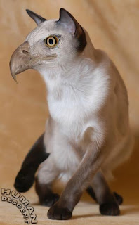 Eagle Eagle Eagle