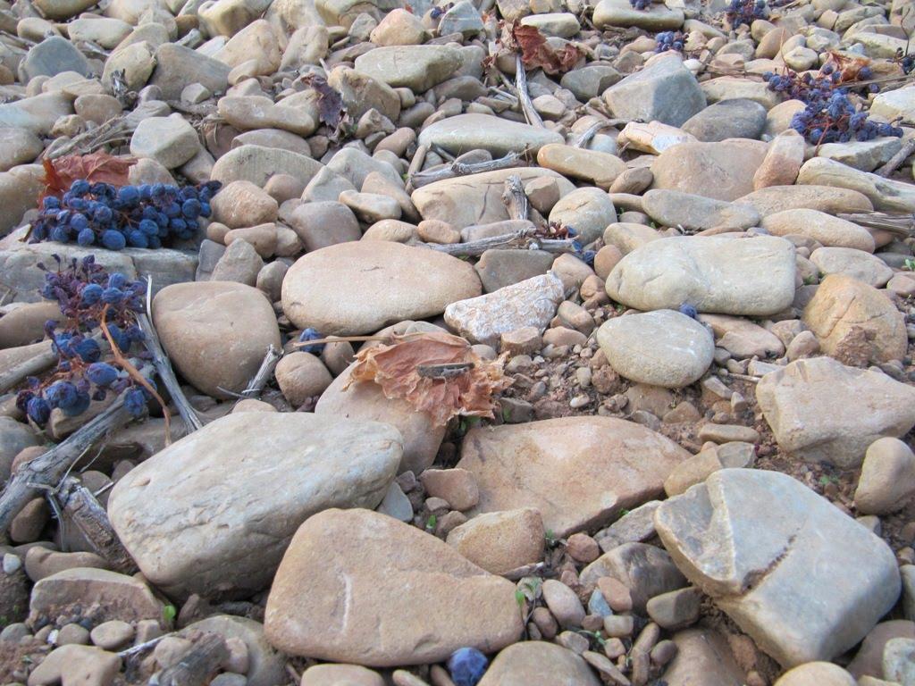 Urbina vinos blog caracteristicas que aporta el suelo al vino for Suelo pedregoso