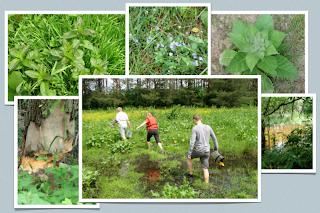 Przeprawa przez mokradła i łąki zdjęcia