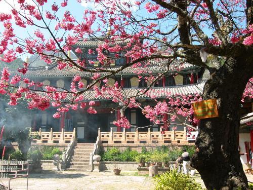 china landscape cherry trees - photo #10