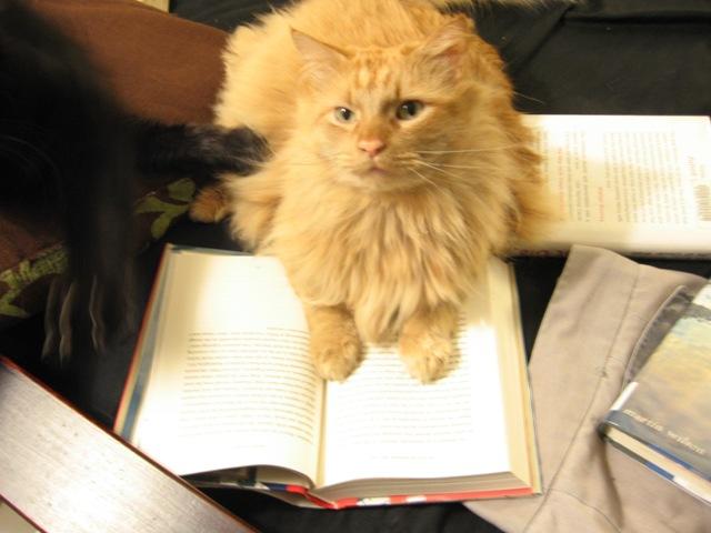 [literate+cat.jpg]