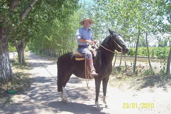 Paseos a caballo, una actividad opcional
