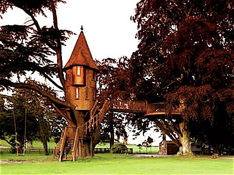 [treehouse.jpg]