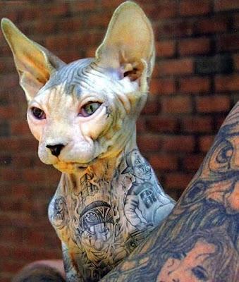 WonderfulTattooed Sphynx Cats Seen On www.coolpicturegallery.net
