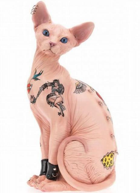Scandal or Sexy Hairless Cat With Tattoos