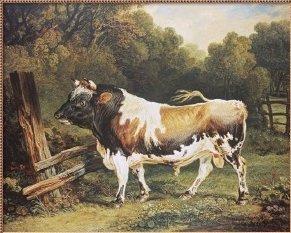 [Alderney+bull]