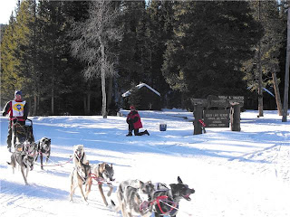 Sled Dog Race - Louis Lake, WY