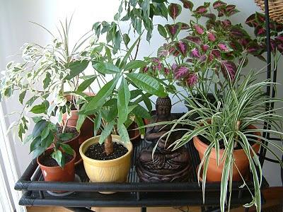 Plantas de interior - Cantinho Zen