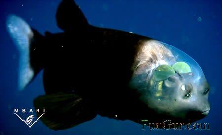 [a357_fishhead.jpg]