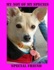 "<a href=""http://littleblondechihuahua.blogspot.com/"">Poppy</a>"