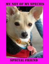 """<a href=""""http://littleblondechihuahua.blogspot.com/"""">Poppy</a>"""