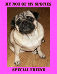"<a href=""http://thedevildog.blogspot.com/"">Lucky</a>"