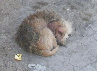 Humane Society de Tijuana  BLOG EXCUSAS PARA NO ESTERILIZAR A