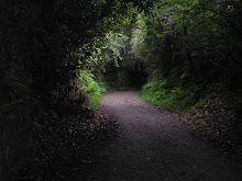 Caminos recónditos del alma