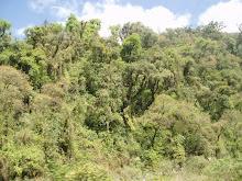 La jungla tucumana