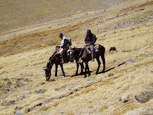 El caballo,el mejor amigo del hombre en el Aconquija