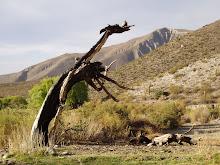 El desierto de Catamarca