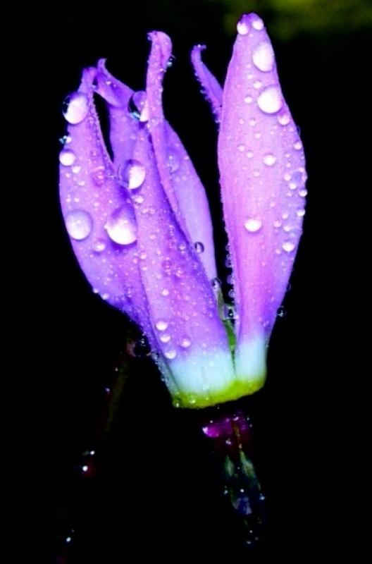 [purple.htm]