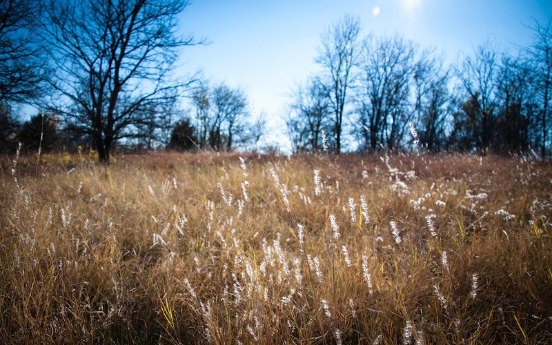 Landscape photo at Arbor Hills Nature Preserve