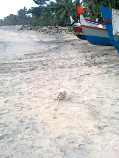 a stray dog in white color resting and caring himself at a beach near alappuzha kerala in front of a stationery fishing boats- Arabian sea shore is the background
