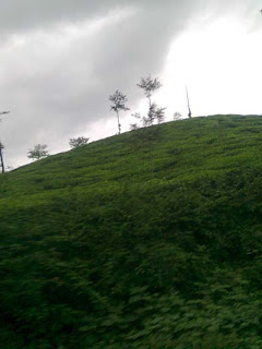 a picture taken on a rainy day from kalpetta vayanadu district kerala- just a fantastic shot of some trees upon the rock