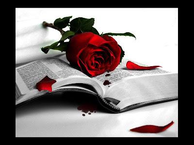 libro+rosa