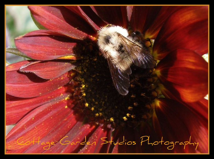 Cottage Garden Studios Photography
