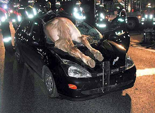 Car with horse through windshield