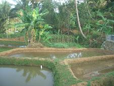 My Farm 1
