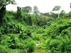 LOS ECUATO GUINEANOS: RECLAMAN LIBERTAD.-