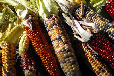 colourful corn photo