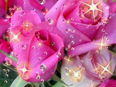 Flores bonitas para regalar con movimiento