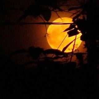 http://4.bp.blogspot.com/_x-7v2Gq4sK0/S2EfKO5sCKI/AAAAAAAAAEY/vs0Lt9gqwYY/s320/full_moon4.jpg