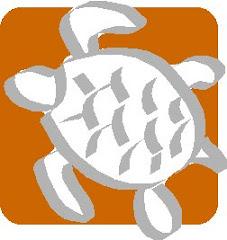 Chiarasalvanatura piccola tartaruga di terra for Tartarughe marine letargo