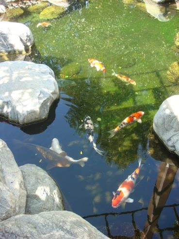 Well Known For Its Unique Setting, The Japanese Friendship Garden Features  A Koi Pond, Stone Zen Garden, Exhibition Hall And Bonsai Tree Collection.