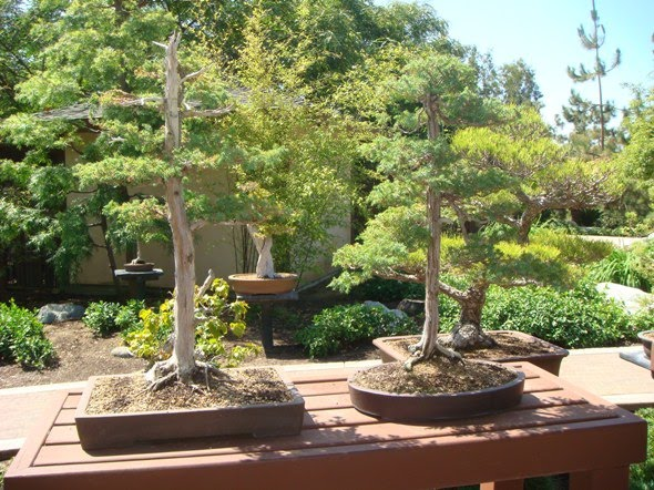 Timeshare Rentals Blog Visit The Japanese Friendship Garden From Your San Diego