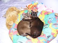 Milo and Coco our Burmese Cats