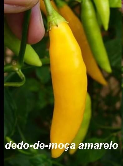 manifestaciones del acido urico en la piel alimentos ricos en vitamina b12 e acido folico vegetales producen acido urico