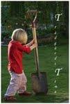 Trädgårds Tema