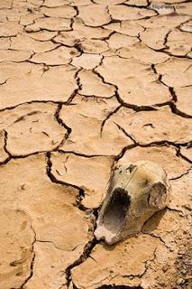 Uma caveira perdida na imensidão do deserto, um rosto desfigurado perdido na multidão