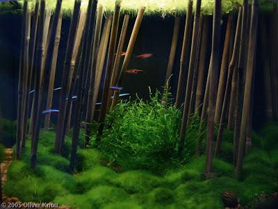 Un aquarium sans substrat nutritif  28L