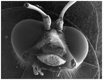 Mikropların mikroskop görüntüleri