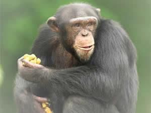 fotos animales de la selva - La niña que convive con animales salvajes América