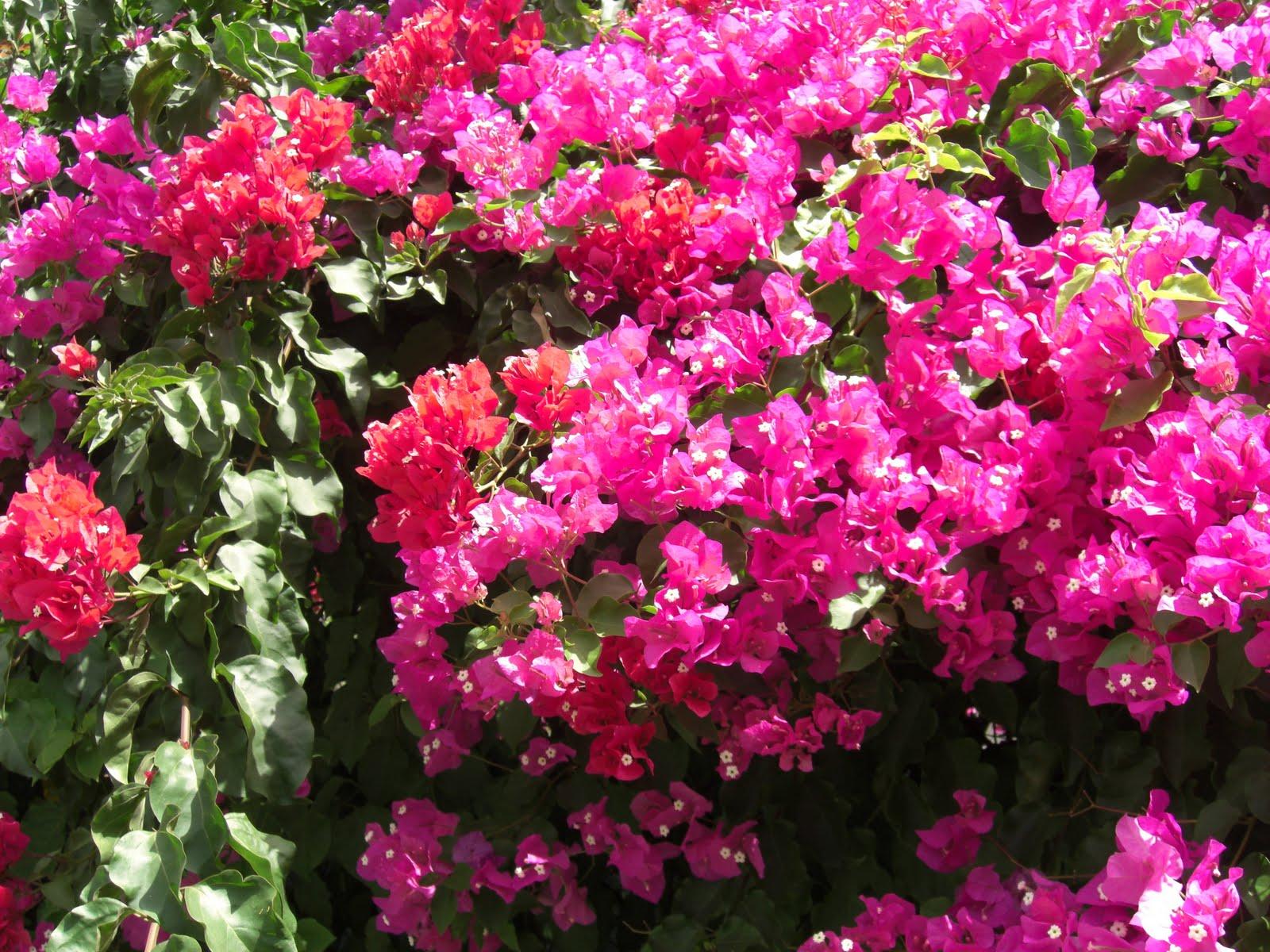 rosas colhidas no jardim do amor:artéria da freguesia lisboeta do campo grande junto ao palácio dos