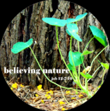 Believing Nature