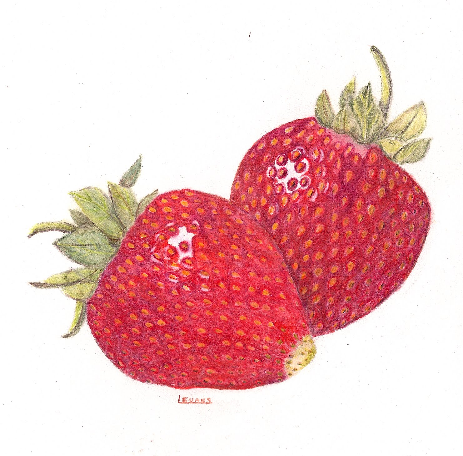 Uncategorized Drawing Of Strawberry drawing a straight line strawberry color pencil workshop workshop