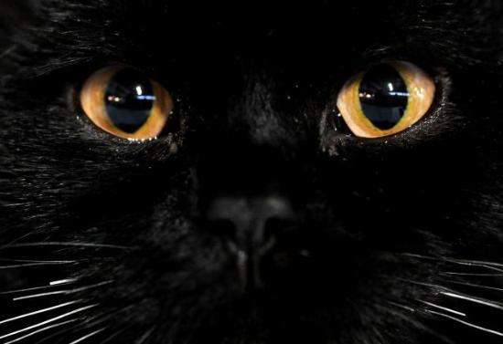 [kara+kedi]