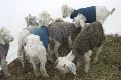 MOHAIR CARDIGAN PATTERNS | Browse Patterns